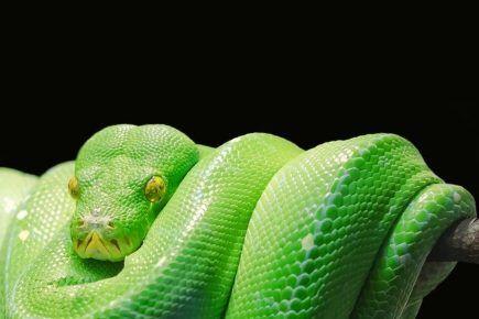 Python als Haustier