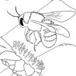 Malvorlage Hummel | Insekten
