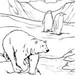 Polar Bears and Penguins - Find the mistake puzzle
