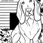 Coloring page basset - dogs