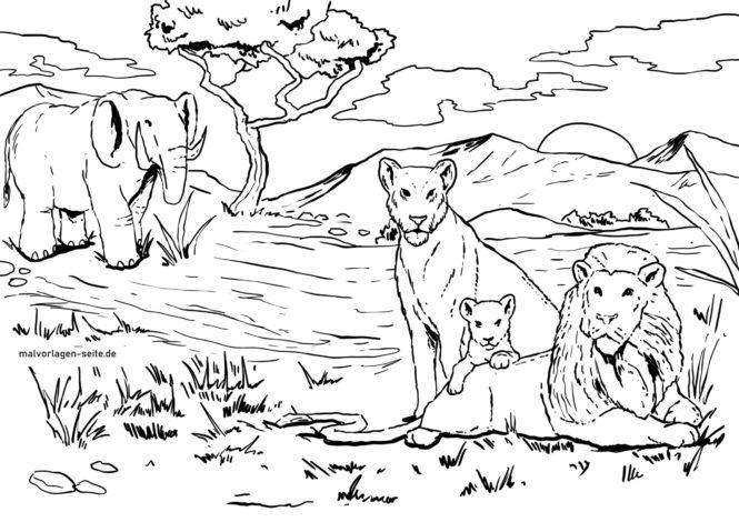Bojanje stranica obitelj lavova
