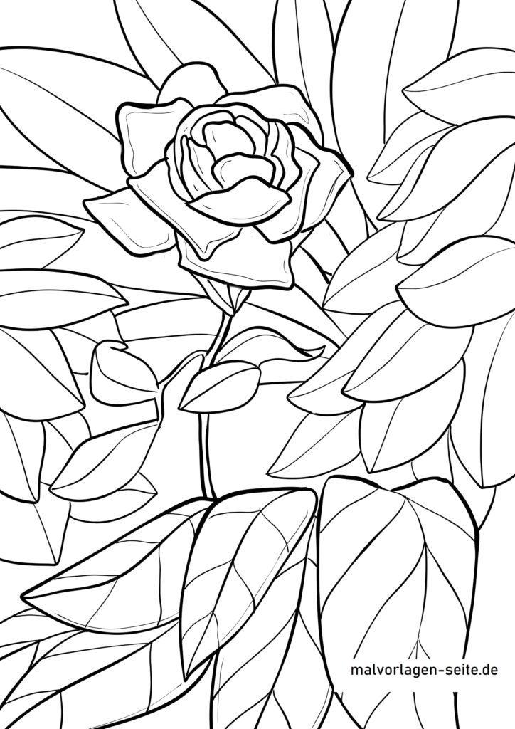 malvorlage rose  blumen  kostenlose ausmalbilder
