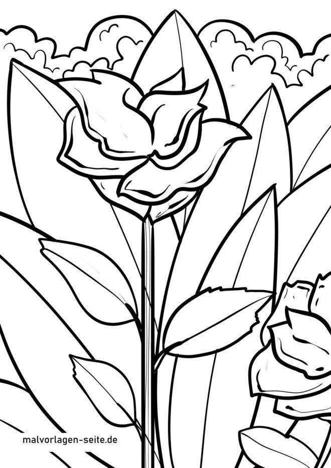 Ausmalbild Rose