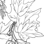 Coloring page maple leaves