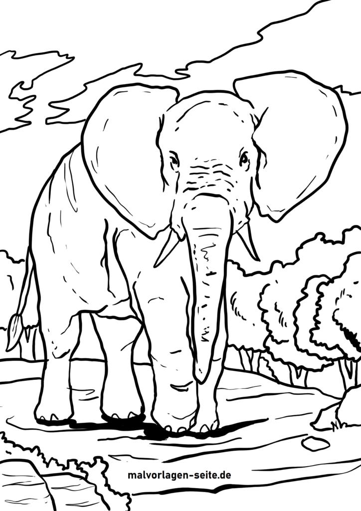 ausmalbilder elefanten kostenlos herunterladen und