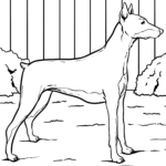 Coloring page doberman - dogs