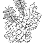 Coloring page pine cones Trees