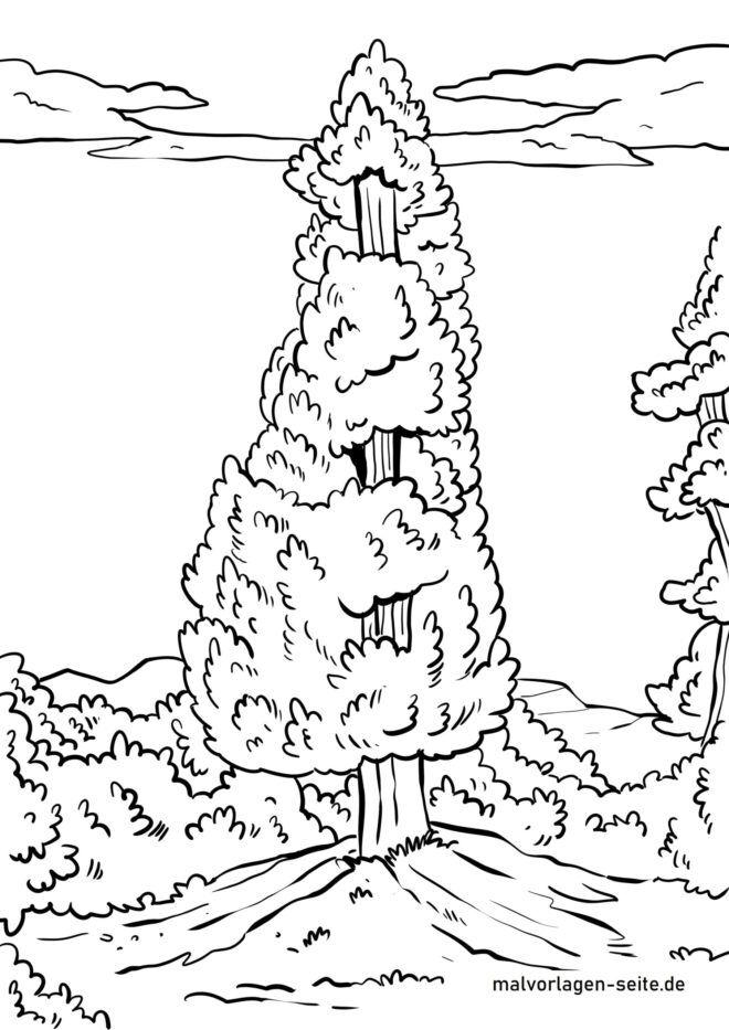 Malvorlage Nadelbaum