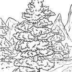 Coloring page conifer | Trees