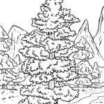 Malvorlage Nadelbaum | Bäume