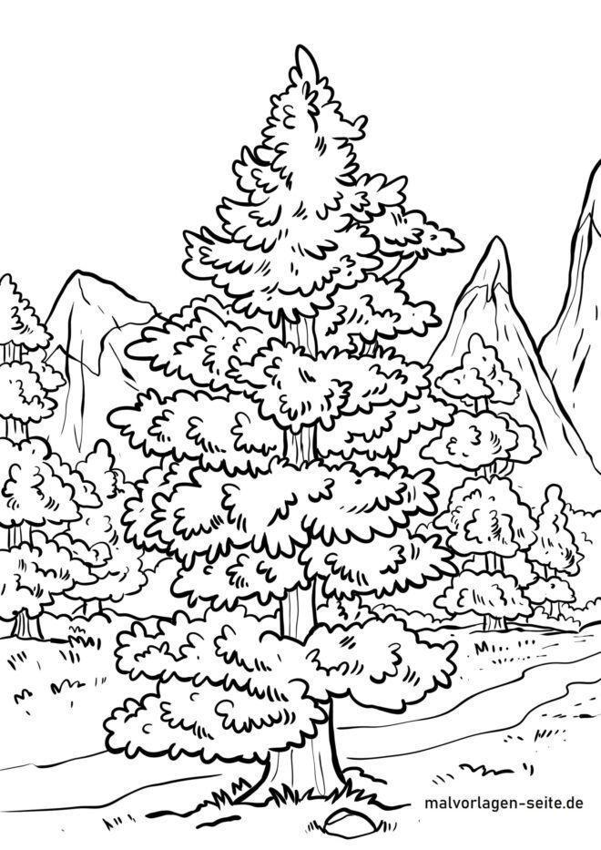 Página para colorir conífera