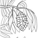 Coloring page cones conifer Trees