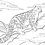 Coloring page snow leopard Wild animals