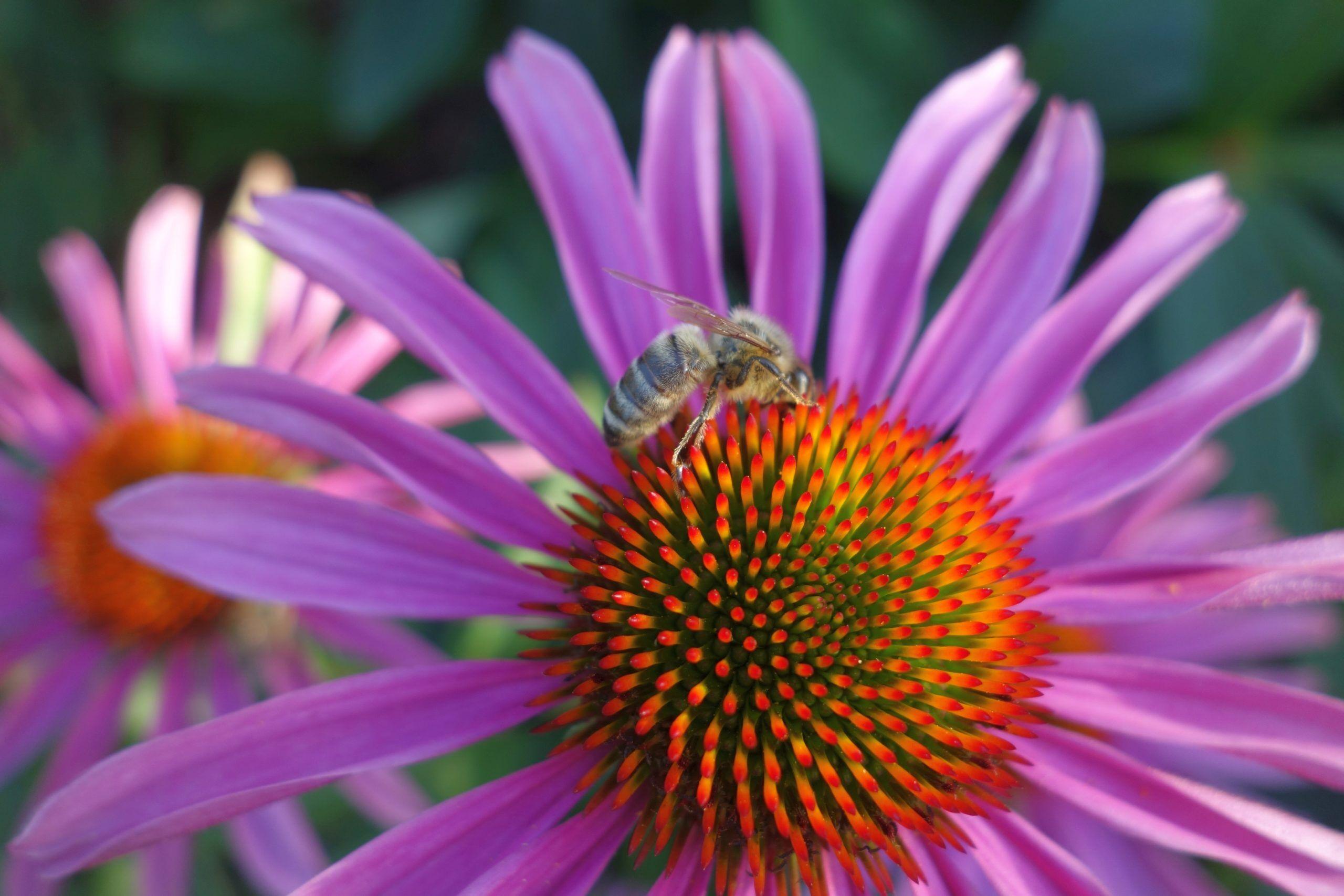 Gartentipps für Einsteiger mit tollen Pflanzenfotos aus dem Garten