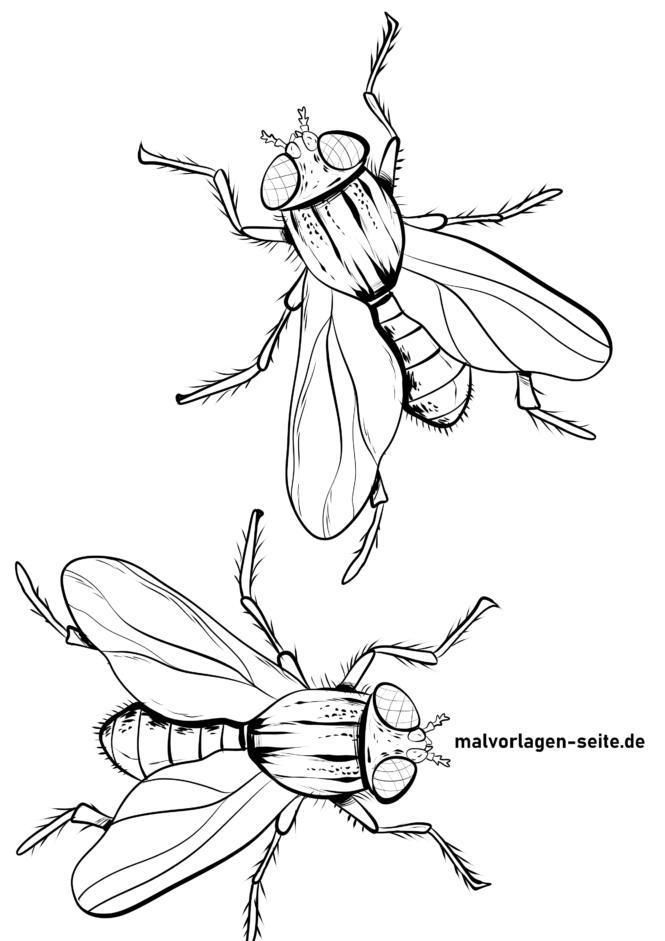 Malvorlage Fliegen