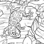 Malvorlage Gecko