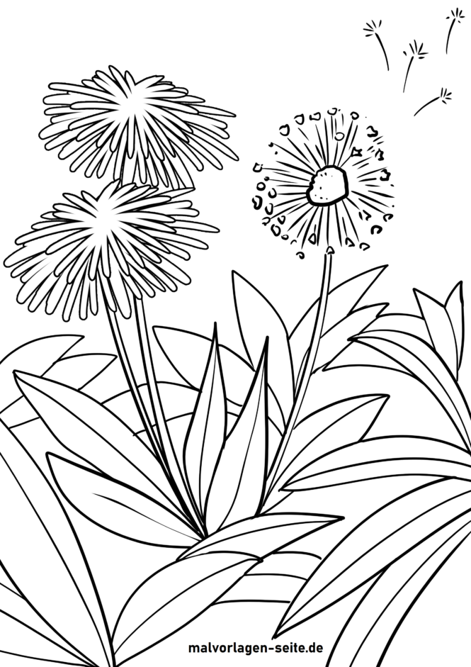 Coloring page dandelion