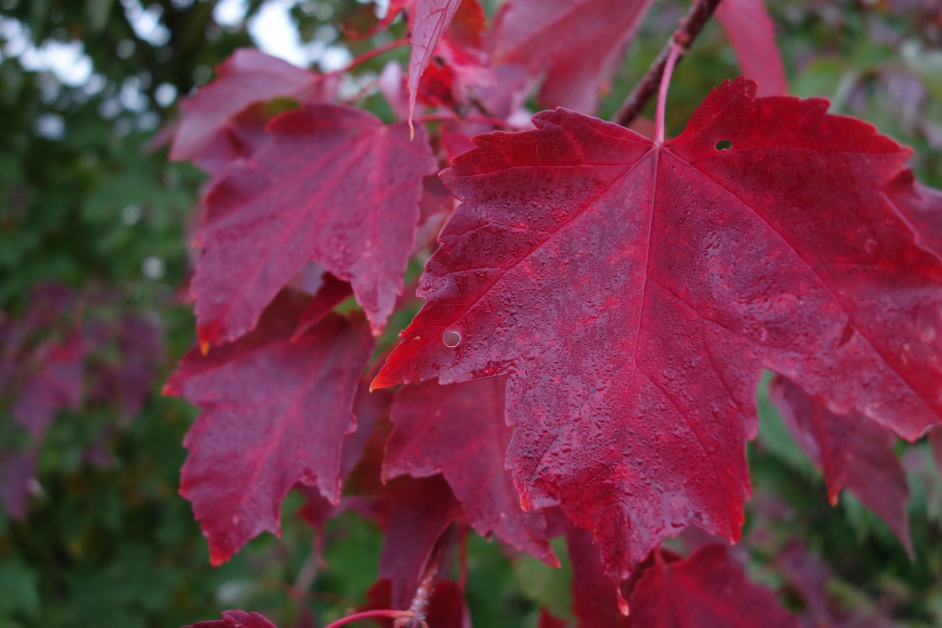 Zašto lišće u jesen postaje šareno?