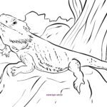Coloring page bearded dragon