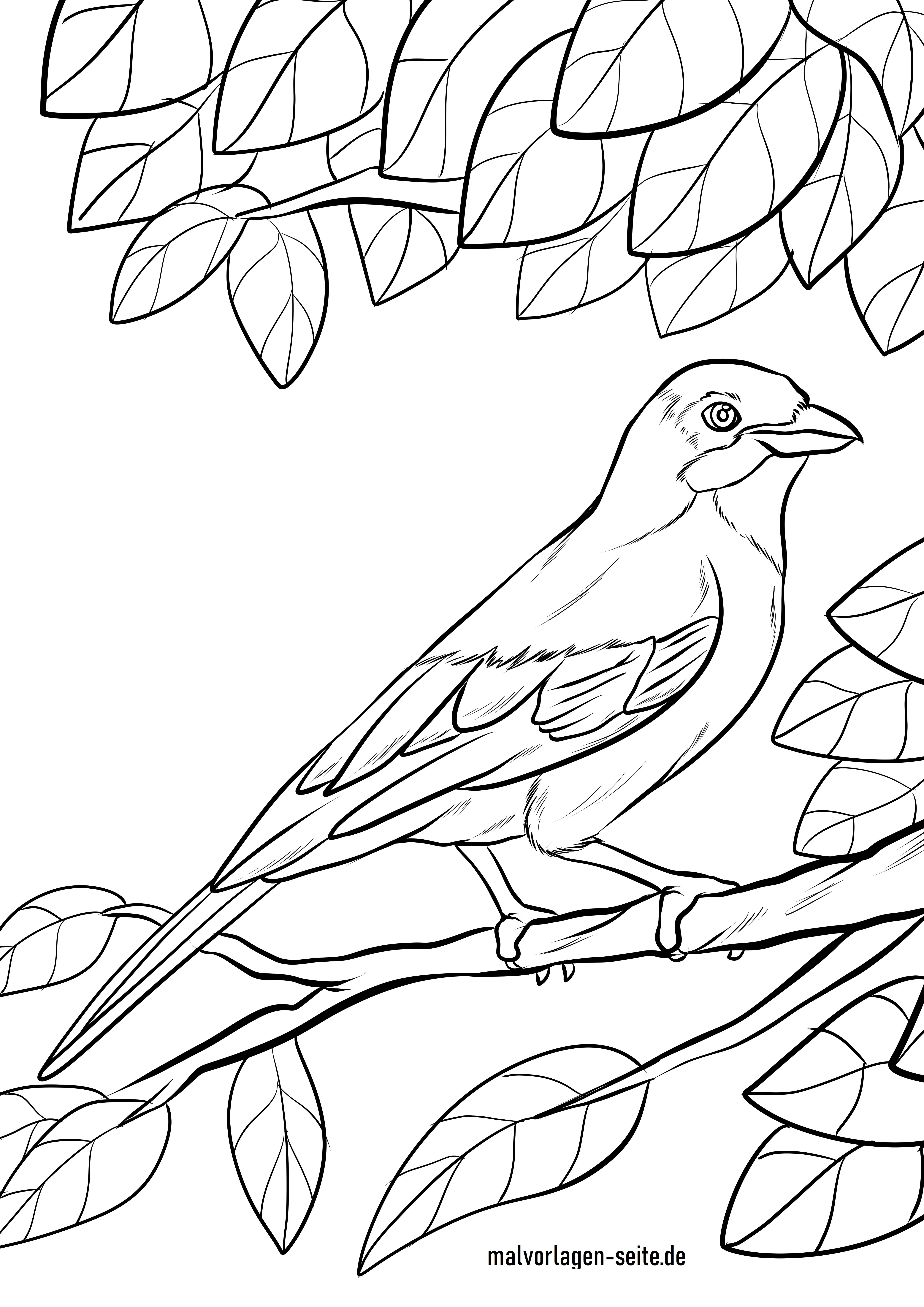 Malvorlage Eichelhäher  Vögel - Kostenlose Ausmalbilder
