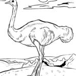 Värityskuva kimppu | Linnut