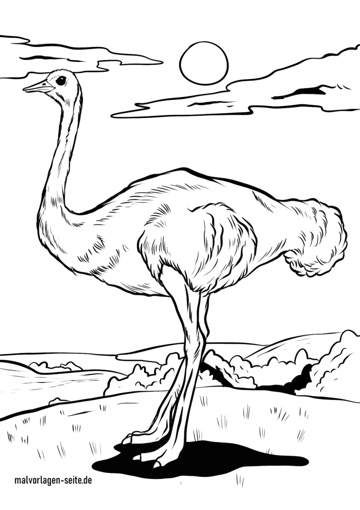 Coloring page ostrich