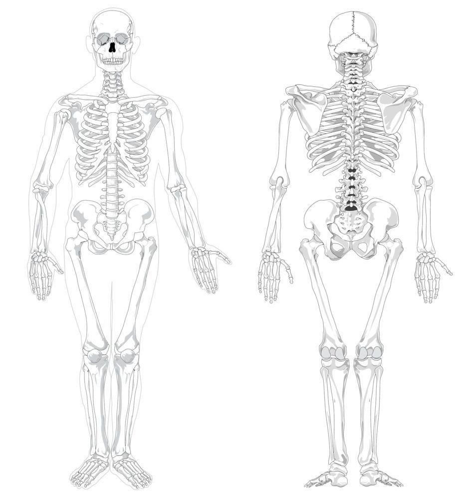 skelett mensch ausmalen  kinder ausmalbilder