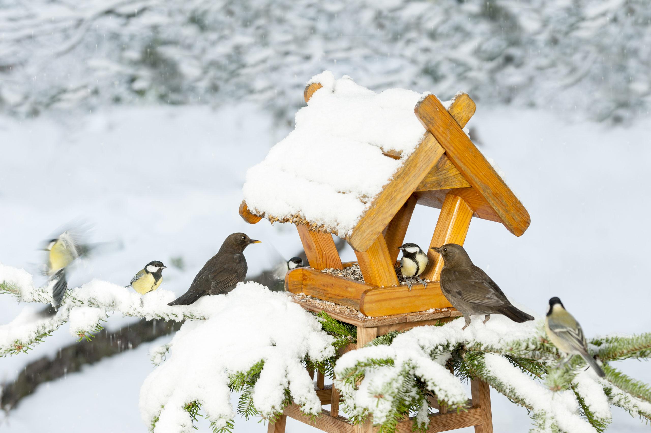 Vogelhäuschen selber basteln