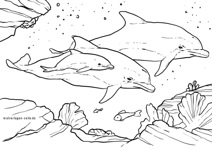 malvorlage delfine  tiere im meer  kostenlose ausmalbilder