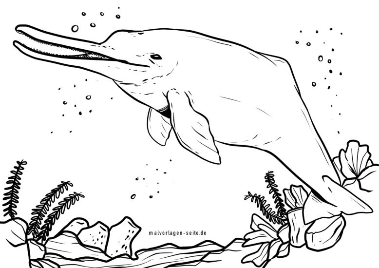 malvorlage flussdelfin  delfine tiere  kostenlose