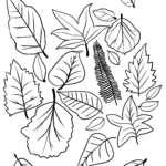 Coloring page autumn leaves | autumn