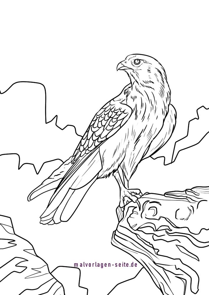 malvorlage habicht  vogel  kostenlose ausmalbilder