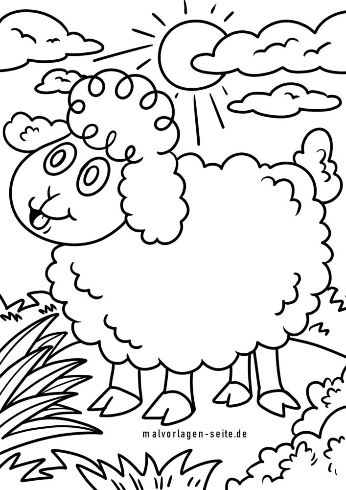 Koloran paj mouton