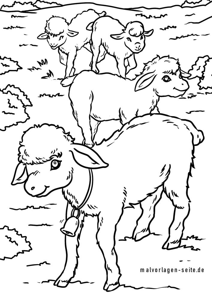 Раскраска овца