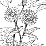Coloriage asters