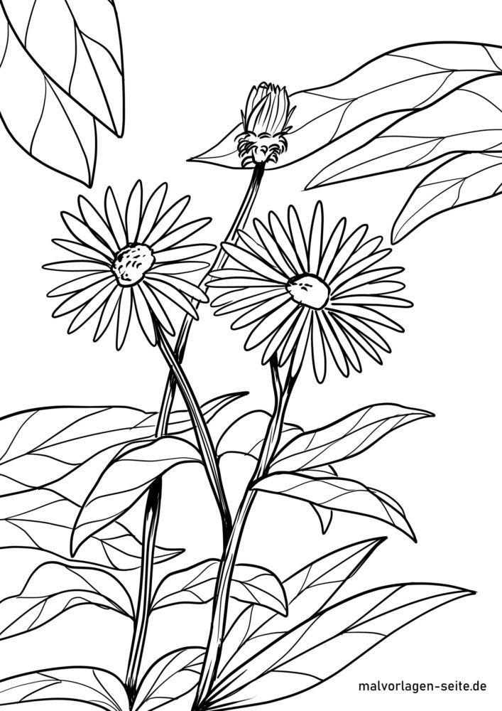 Tegninger til farvelægning asters