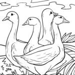 Geese coloring pages | Birds