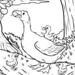 Tegninger til farvelægning gås | Gæs fugle