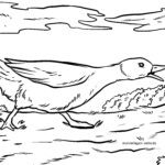 Coloring page goose