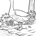 Guska za bojanje | Guske ptice