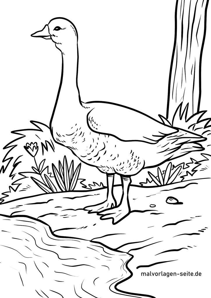 malvorlage gans  gänse vögel  kostenlose ausmalbilder