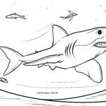 Coloring page shark | Animals in the water