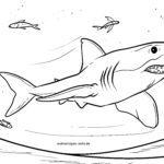 Omalovánky žraloci | Zvířata ve vodě