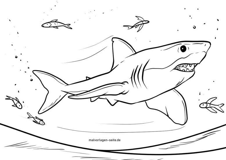 Morski pas za bojanje