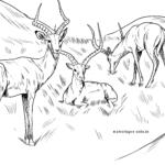 Boyama səhifəsi impalaları
