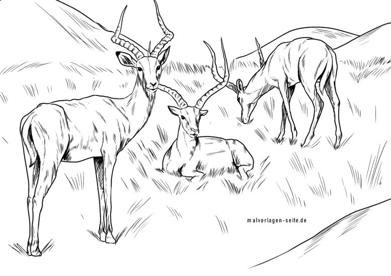 Mga panid sa pagkolor impalas