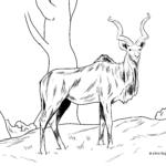 Omalovánka kudu