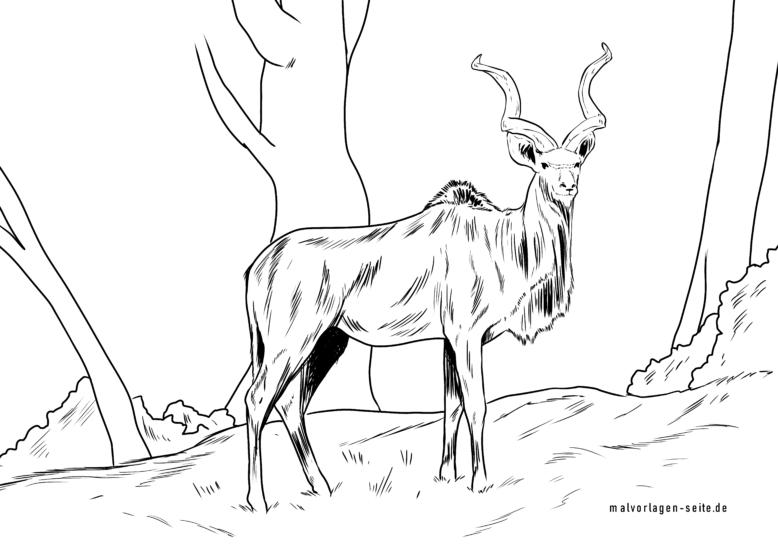 Koloreztatzen orria kudu