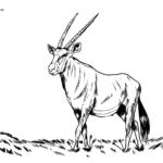 Boyama səhifəsi oryx antilop