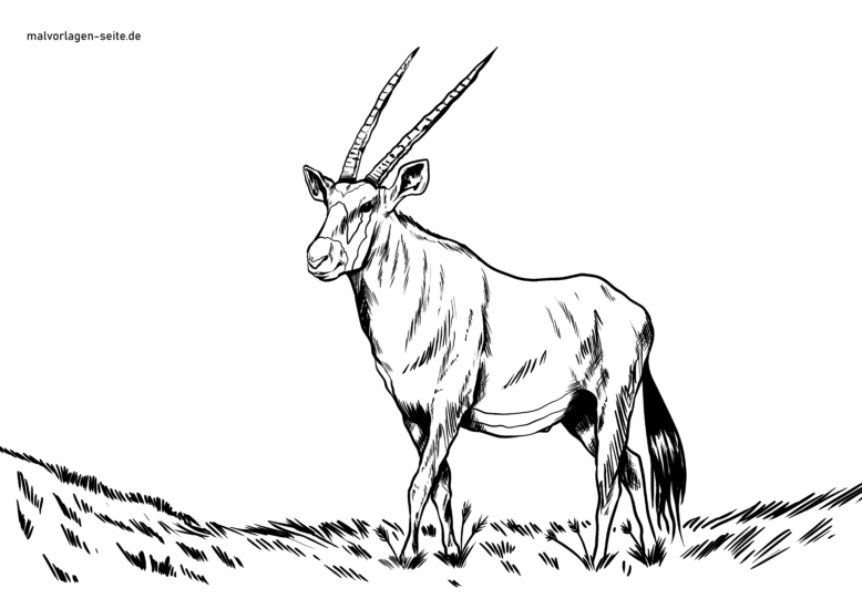 Coloring page oryx antelope